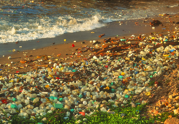 Plastic Polluted Beach
